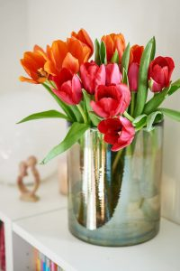 photo de tulipes