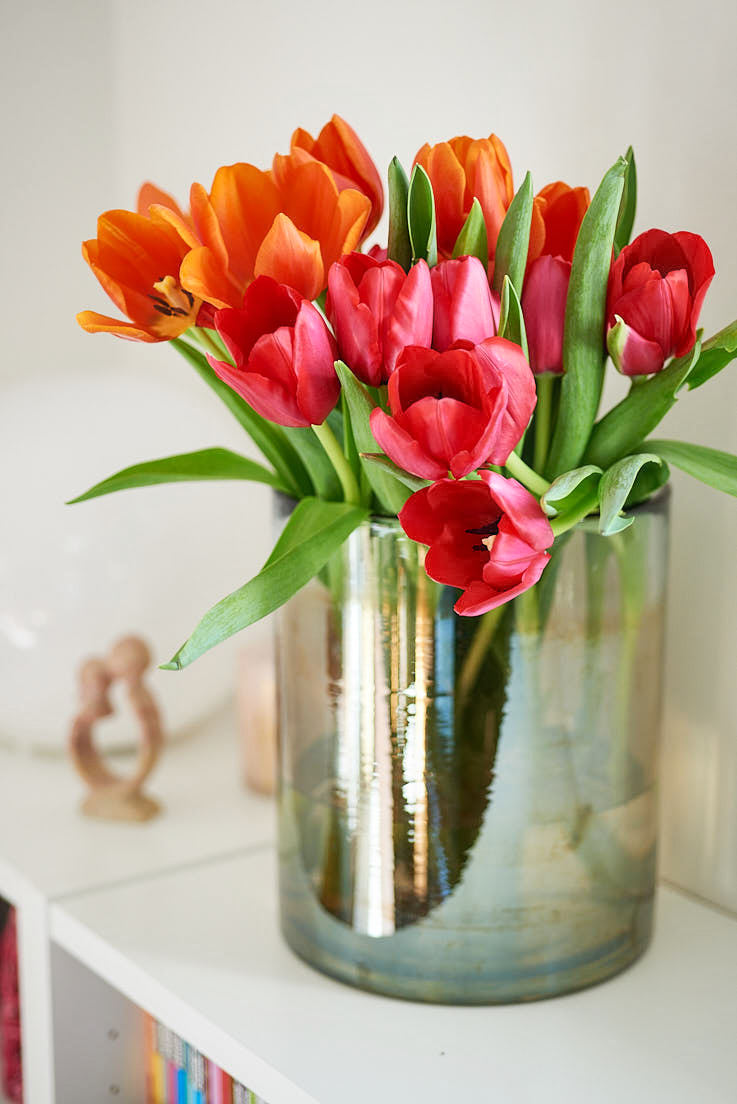 photo de tulipes